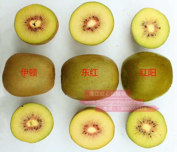 <b>红阳、东红、以及红阳晚熟的一般亩产</b>