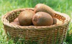 孕妇可以吃猕猴桃吗?