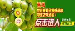 2017年秦林猕猴桃基地最新猕猴桃价格