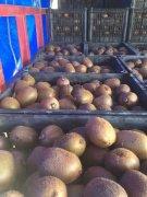 猕猴桃冬季用什么肥料好?