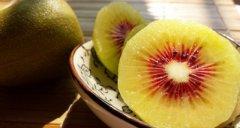 陕西红阳猕猴桃和四川红