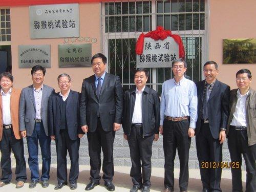 """眉县被授予""""中国猕猴桃之乡""""。"""