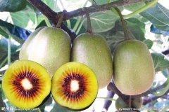能有效祛除黑斑的最佳水果-猕猴桃