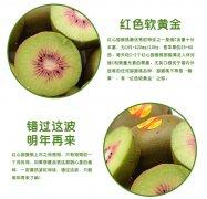 红心猕猴桃的营养价值高吗,怎么选择红心猕猴