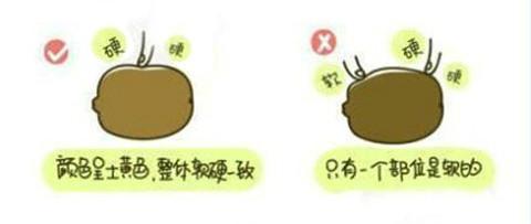 猕猴桃如何挑选?