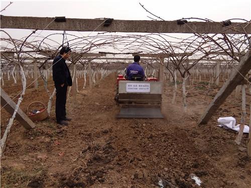 眉县猕猴桃果园新机械研发取得新进展