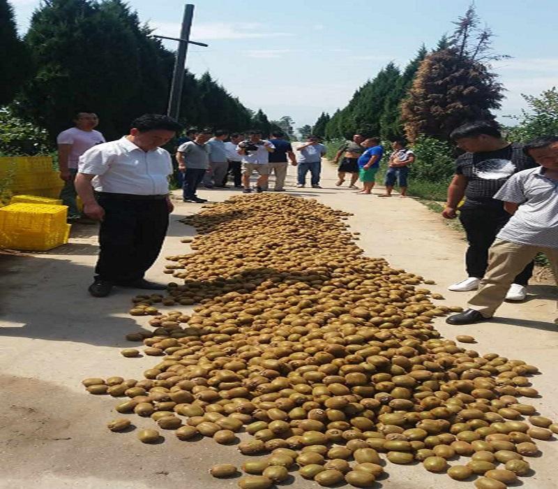 年年推土机碾压猕猴桃,周至县到底发生了什么?