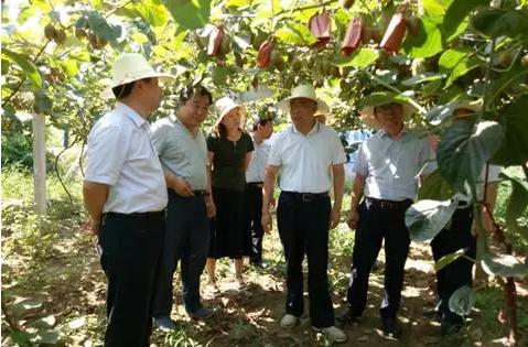重磅!扶风县万亩猕猴桃产业园,迎来陕西省果业集团领导视察