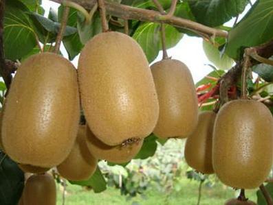 猕猴桃 男人想年轻多吃5种食物