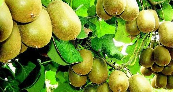 营养价值极高水果盘点 春季最适合吃什么水果-营养价值