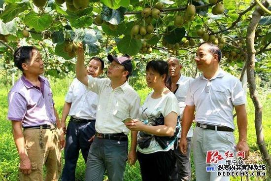 湖南农大王仁才教授来绥宁指导猕猴桃产业开发