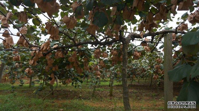 麦架镇组织人大代表调研猕猴桃种植基地