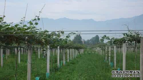 果农张德福:十亩猕猴桃带我走上小康路