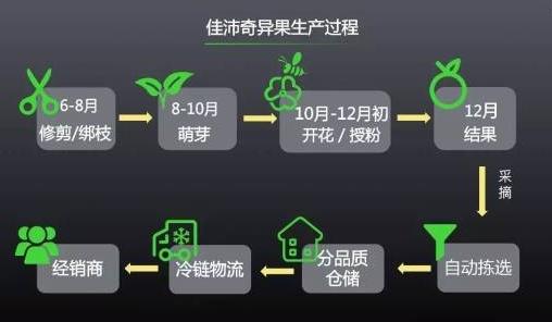 佳沛奇异果: 百亿品牌猕猴桃