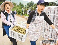 猕猴桃助农增收