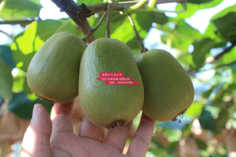 分清国产和进口猕猴桃的这六大不同点