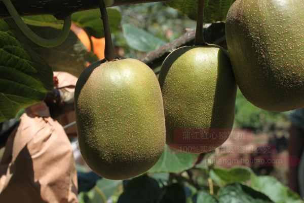 每天吃几个红心猕猴桃最为合适?