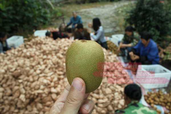 红心猕猴桃是留住你青春的天然养生水果