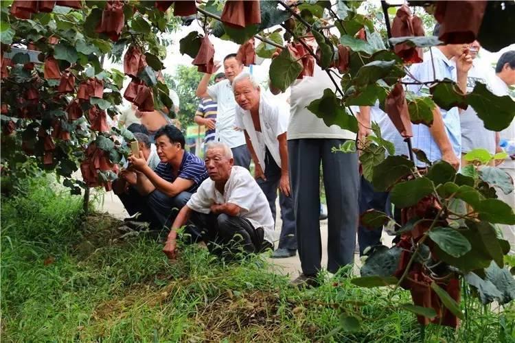 江苏省徐州市50多位猕猴桃从业人员参观考察中国猕猴桃网运营服务中心-本站动态-中国猕猴桃网