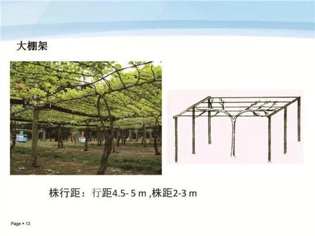 猕猴桃怎么样标准化建园
