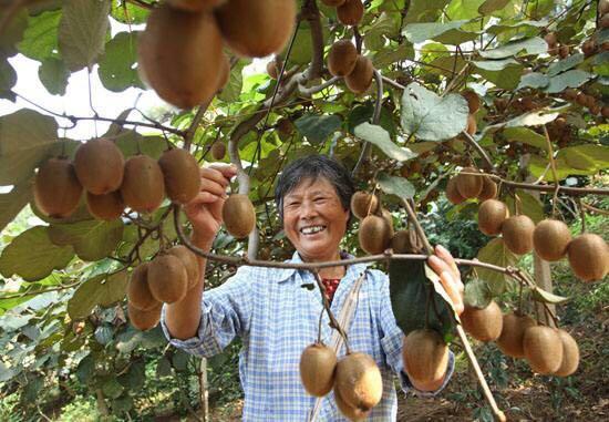 连奥巴马都认定好吃、甜,忙着做宣传,看图6老奶奶高兴那个表情