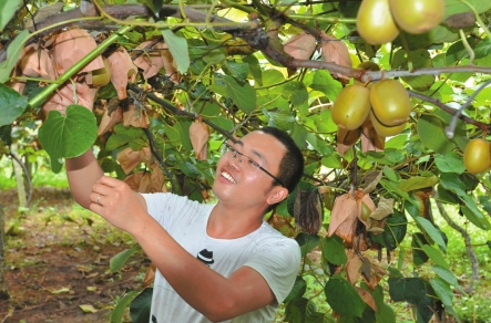 宜宾大学生返乡创业种猕猴桃 助力家乡脱贫致富