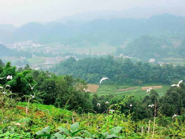 134户雅安老农,种出网红猕猴桃,杨幂舒淇都为他们站台