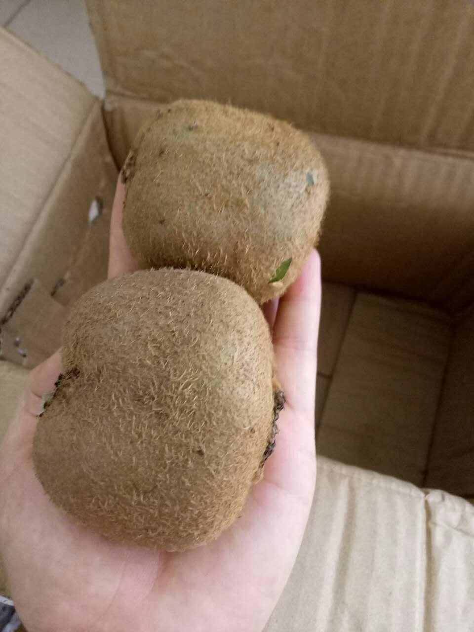15.9元一件的陕西绿心猕猴桃你还在抢吗?