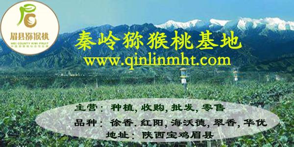 眉县猕猴桃价格,徐香猕猴桃