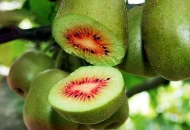 食疗养生常识:猕猴桃的营养价值及其功效作用