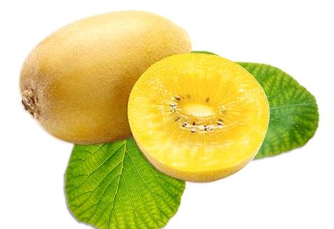 黄心猕猴桃孕妇能吃吗 孕妇吃黄心猕猴桃的好处