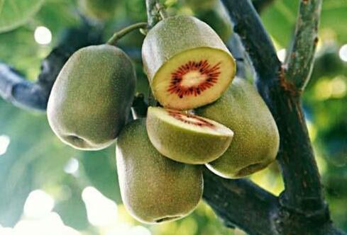 红心果是红心火龙果吗 是红心猕猴桃吗