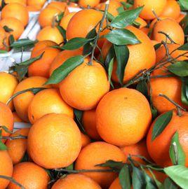 秭归橙子和猕猴桃一起食用好吗?