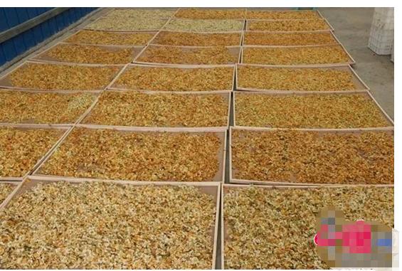西南地区首条猕猴桃花粉生产线在黔江成功投产
