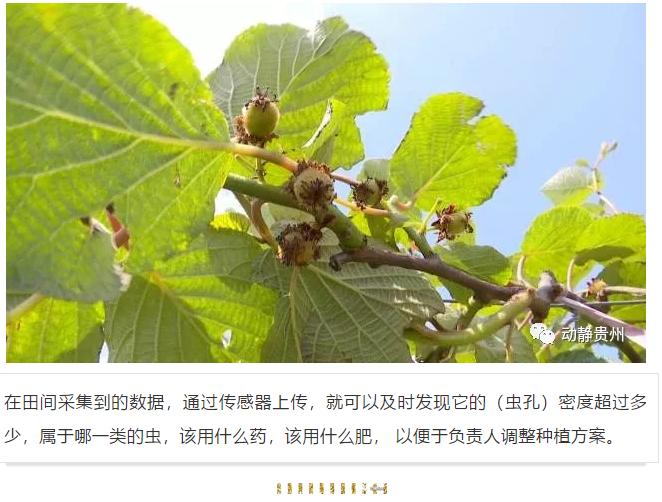 """""""贵州猕猴桃就是这么神奇""""认清大数据,不是神仙!"""