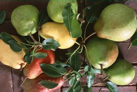 猕猴桃和梨能一起榨汁吗?猕猴桃和梨可以一起吃吗?