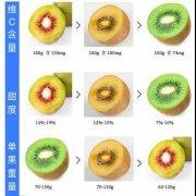 猕猴桃黄心和绿心的区别,起源,外形,口感,价格,营养价值,产地,储存时间