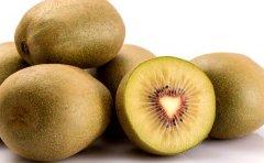 猕猴桃成熟季节!徐香,红阳,海沃德,翠香,华优都不一样!