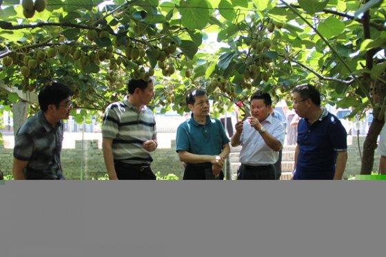 国家质量监督检验检疫总局来眉县检查验收出口猕猴桃质量安全示范区创建工作