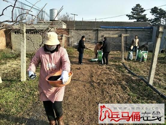 周至县农业局农科试验站扎实推进猕猴桃资源圃管理工作