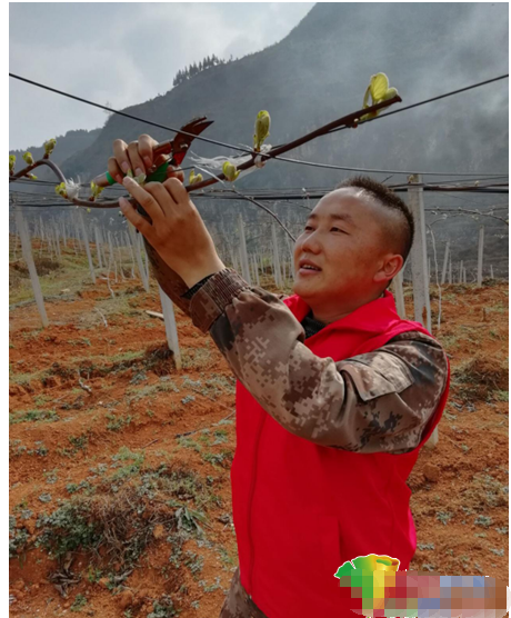 志愿者安文忠:用猕猴桃点亮老乡脱贫致富梦