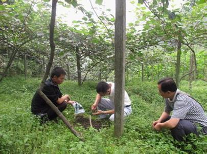猕猴桃施用有机肥关键技术