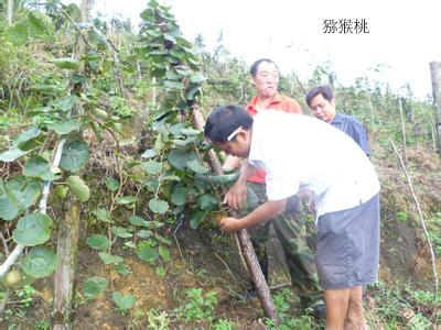 猕猴桃果园有哪些土肥水管理技术
